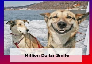 million dollar smile of a dog